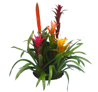 Colorful indoor plant photo gallery for offices and homes and patios - Colorful indoor plants ...