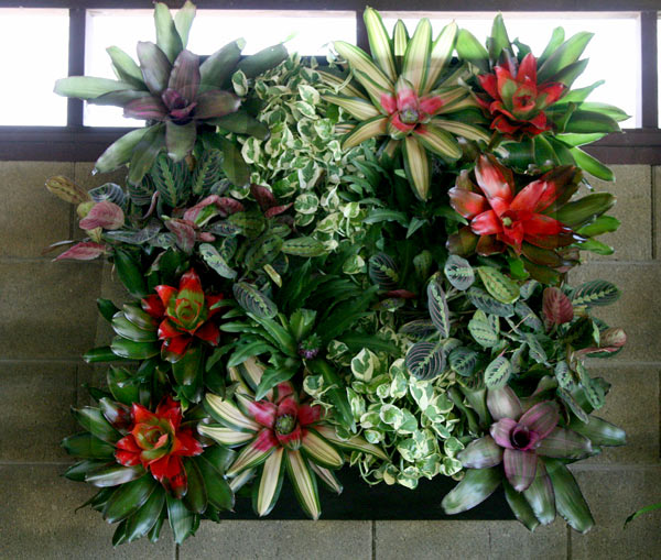 Indoor plants for offices lobbies and homes phoenix scottsdale - Indoor colorful plants ...