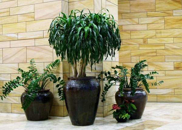 Indoor Plants and Interior Landscape Lobby in  Phoenix area