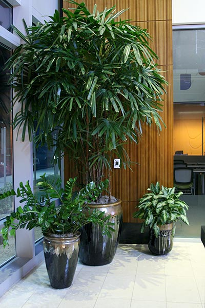 ... For Your Unique Interior Décor. Plant Friends Take In Consideration All  Of The Elements Of Lighting, Colors And Style To Select The Right  Combination Of ...