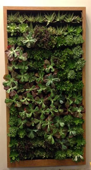 Living Succulent Wall Phoenix Arizona