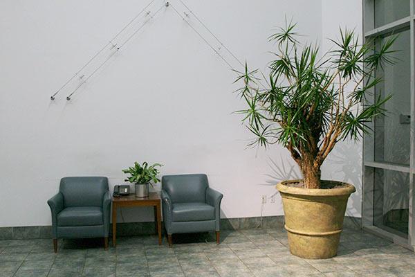 Plants for lobby Phoenix Area