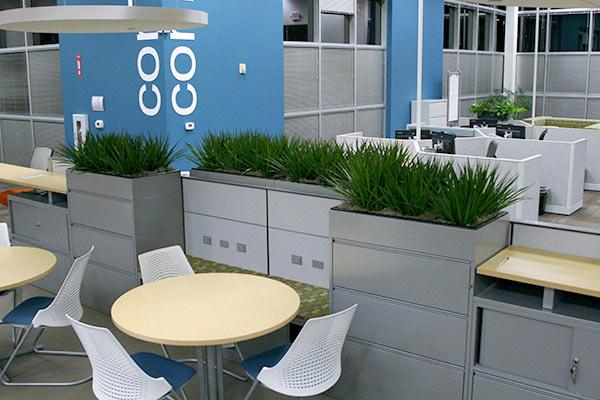 Plants for Office Phoenix to Sedona