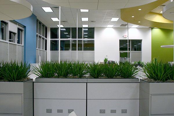 Plants for Office from Phoenix - Sedona AZ